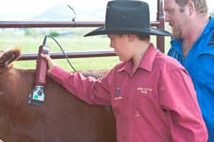 There is no substitute for experience when clipping cattle.
