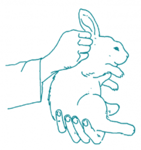 sketch of someone holding a rabbit